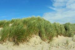 Het gras van het duin Royalty-vrije Stock Afbeeldingen