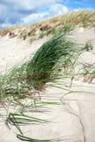 Het gras van het duin in de wind Royalty-vrije Stock Foto