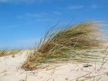 Het gras van het duin met blauwe hemel Royalty-vrije Stock Fotografie