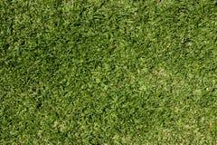 Het gras van het gazon Stock Foto