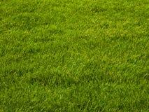 Het gras van het gazon Stock Afbeelding
