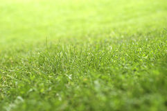 Het gras van het gazon Royalty-vrije Stock Fotografie