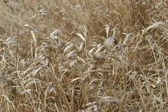 Het gras van het gebied Stock Foto