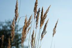 Het gras van het gebied Stock Fotografie