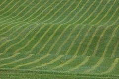 Het Gras van het golf Royalty-vrije Stock Foto's