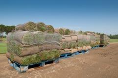 Het gras van het gras Stock Foto's