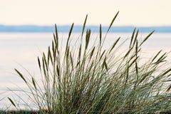 Het gras van het gras stock fotografie