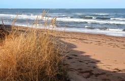 Het Gras van het strand Stock Foto