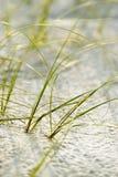 Het gras van het strand Stock Foto's