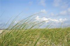 Het gras van het strand stock fotografie