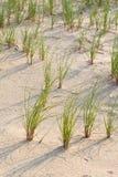 Het gras van het strand Royalty-vrije Stock Foto's