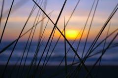 Het Gras van het strand stock afbeeldingen