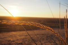 Het gras van het zandduin Stock Foto's