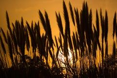 Het Gras van Pampass Royalty-vrije Stock Afbeeldingen