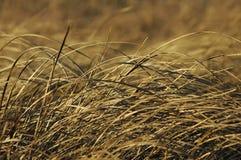 Het Gras van Prarie Royalty-vrije Stock Foto's