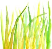 Het gras van Watercolour Royalty-vrije Stock Fotografie