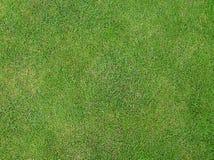Het Gras van Wimbledons Stock Foto