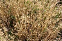 Het gras verdween in de zomer langzaam en werd droog royalty-vrije stock afbeelding