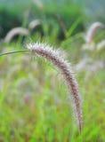 Het gras is volledig van dauw Stock Afbeelding