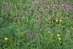 Het gras is volledig van kleuren stock afbeeldingen