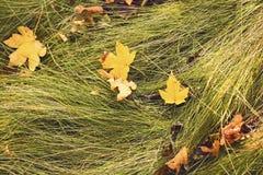 Het grasachtergrond van de herfst Close-up met de bloem van het de herfstgebied en droog gras Royalty-vrije Stock Fotografie