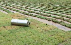 Het grasblad van het gras op voetbalgebied Royalty-vrije Stock Foto's
