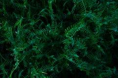 Het grasgebied bloeit donkergroene achtergrond Tropisch struikgewas Geheimzinnige wereld van flora De geheime bosabstractie bloem royalty-vrije stock foto's
