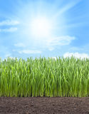 Het Grashemel van het tarwegebied royalty-vrije stock afbeelding