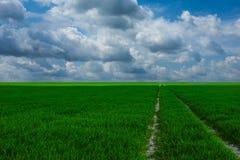 Het grasleven is mooi Royalty-vrije Stock Afbeeldingen