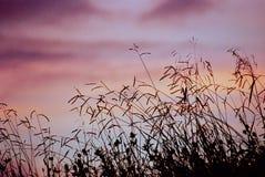 Het grasrijke Silhouet van de Weide Royalty-vrije Stock Afbeeldingen