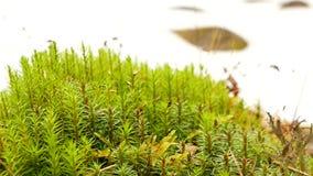 Het grasseizoenen van de de lentesneeuw stock video