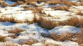 Het grasseizoenen van de de lentesneeuw stock videobeelden