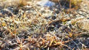 Het grasseizoenen van de de lentesneeuw stock footage