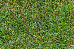 Het grastextuur van de herfst Royalty-vrije Stock Foto