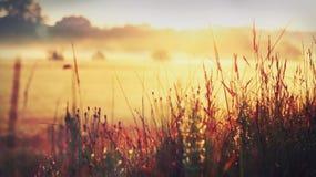 Het graszonlicht van de ochtenddauw Stock Fotografie
