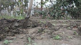 Het graven in de tuin stock video