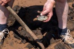 Het graven Tweekleppige schelpdieren stock foto's
