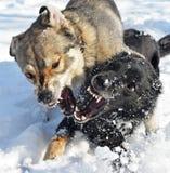 Het grijnzen monden van twee honden Stock Fotografie