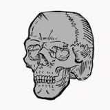 Het grijs van de schedel Royalty-vrije Stock Foto