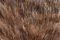 het grijs van het bontdier Royalty-vrije Stock Afbeelding