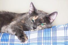 Het grijze blauwe eyed kat ontspannen op bed Stock Fotografie