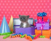 Het grijze en witte katje in verjaardagsdoos met stelt en partij Ha voor Stock Fotografie