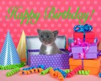 Het grijze en witte katje in verjaardagsdoos met stelt en partij Ha voor Royalty-vrije Stock Foto's