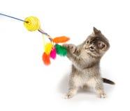 Het grijze katje spelen met stuk speelgoed stock foto's