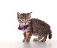 Het grijze Katje van de Gestreepte kat Royalty-vrije Stock Foto