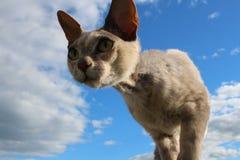 Het grijze kattensilhouet op blauwe hemelachtergrond neemt heimelijk royalty-vrije stock afbeeldingen
