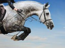 Het grijze paard in het springen toont tegen blauwe hemel Stock Foto