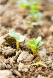 Het Groeien/de macro van zaden stock fotografie