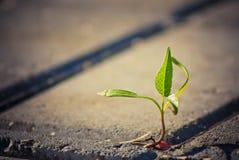 Het groeien van de boom door barst in bestrating Stock Afbeelding