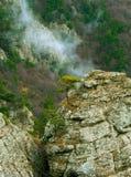 Het groeien van de boom in een rots amid het nevelige bos Stock Foto